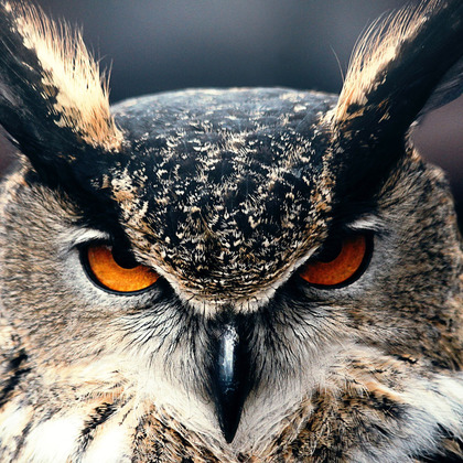 22398 eagle owl 2880x1800 animal wallpaper